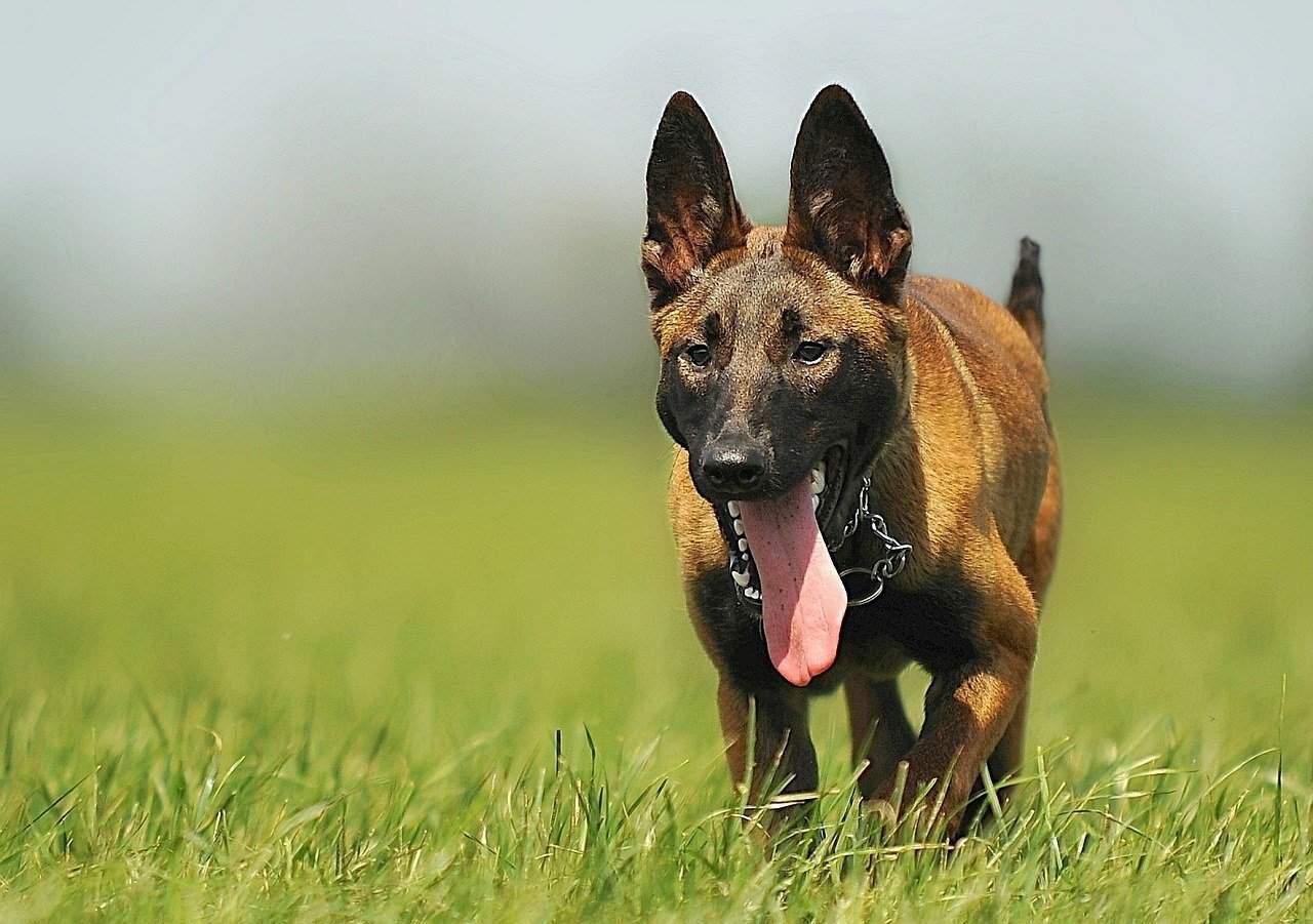 Arikon-Dog-Leash