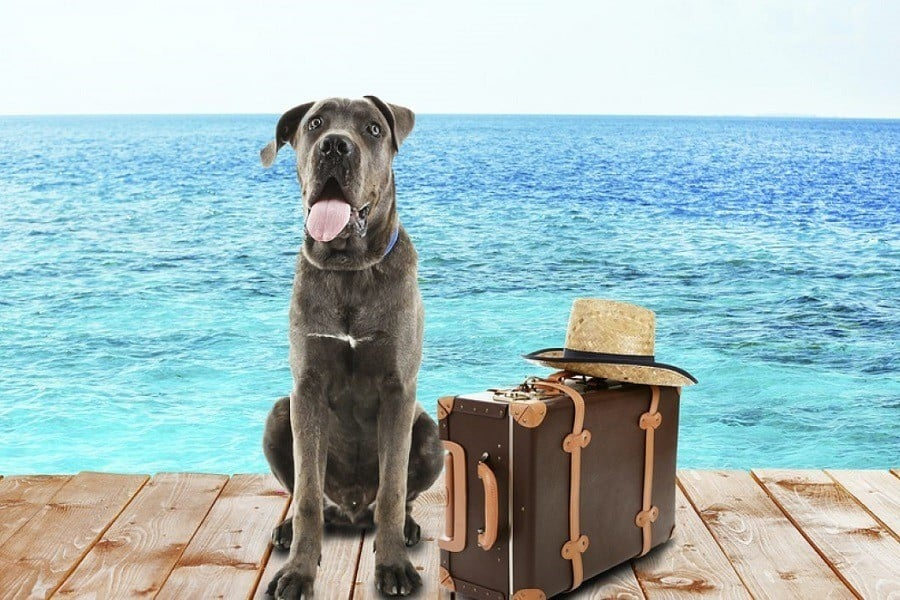A Buying Guide For Large Dog Travel Accessories