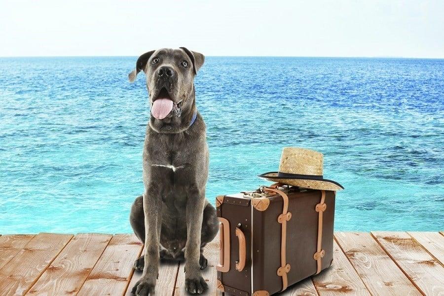 Dog Travel Accessories