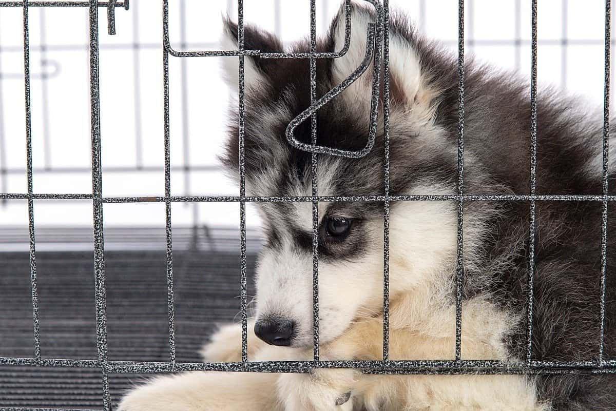 best large dog crate