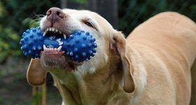 best indestructible dog toys