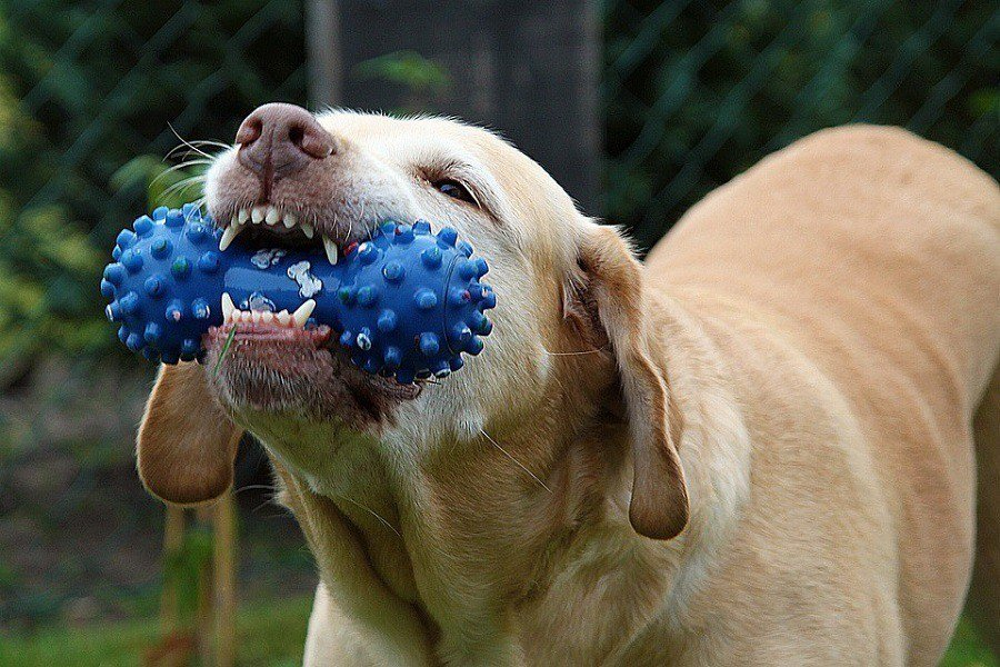 The Five Most Indestructible Dog Toys