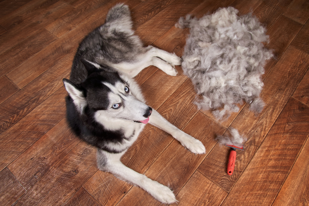 stop dog shedding