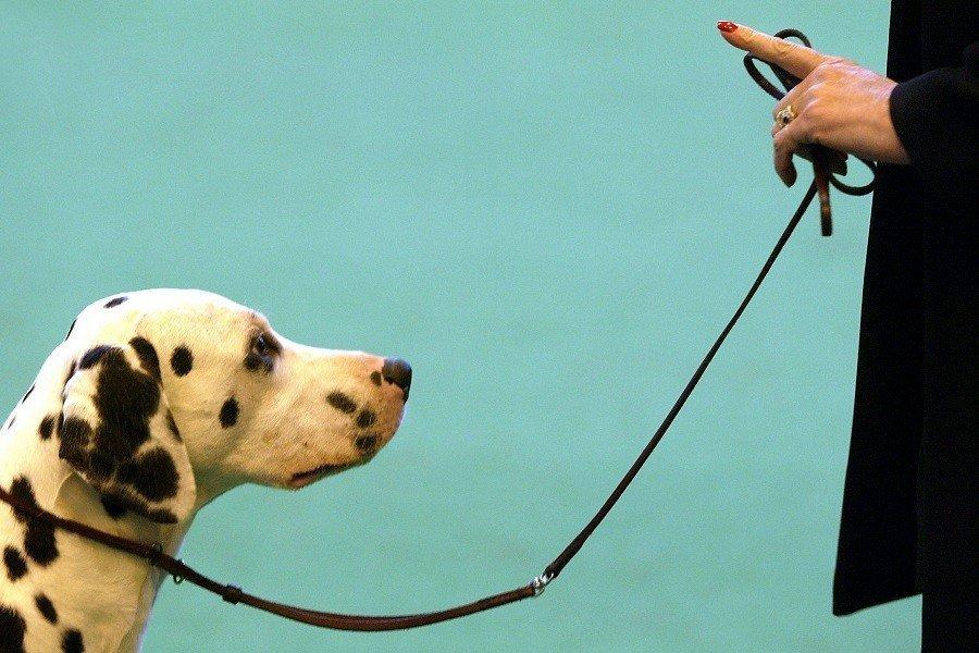 dog commands