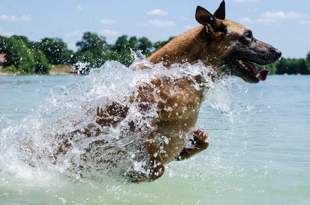 best swimming dogs