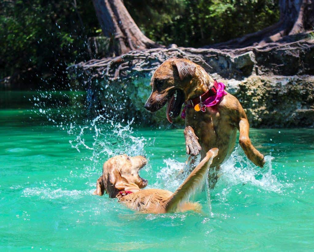 Can All Dogs Swim? 30 Best and Worst Swimming Dogs