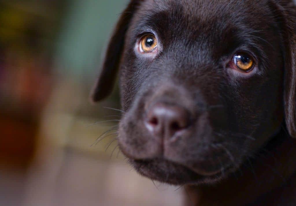everything-puppies-need