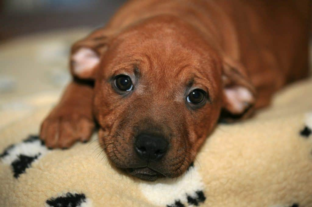 home remedies for worms in puppies