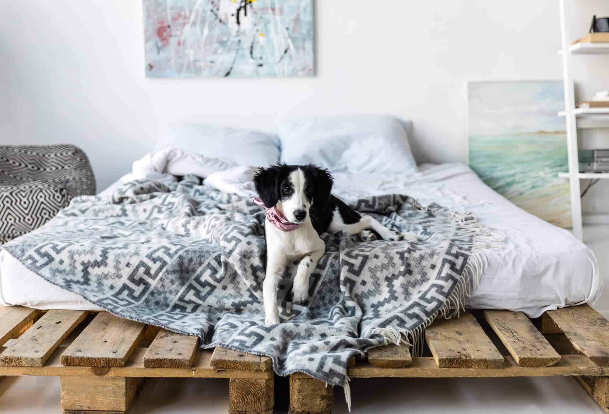 puppy proofing bedroom