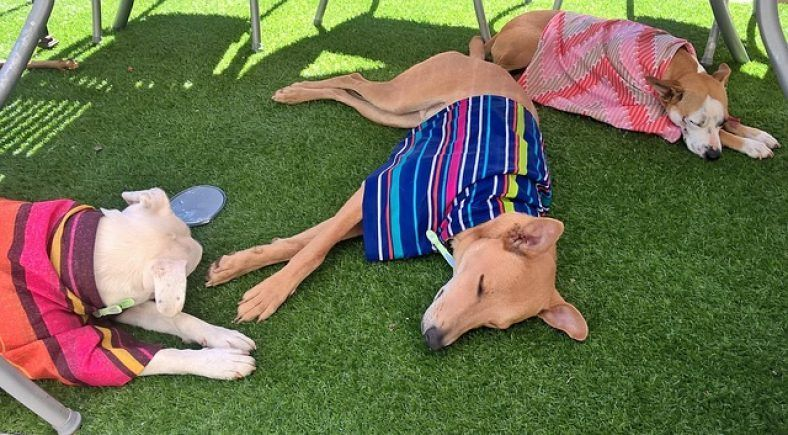how hot is too hot for a dog