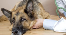 most unhealthy dog breeds