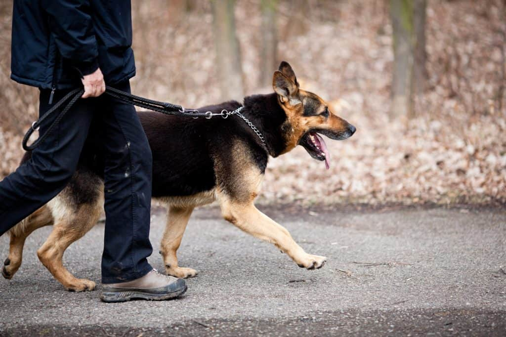 dog commands for a german shepherd puppy