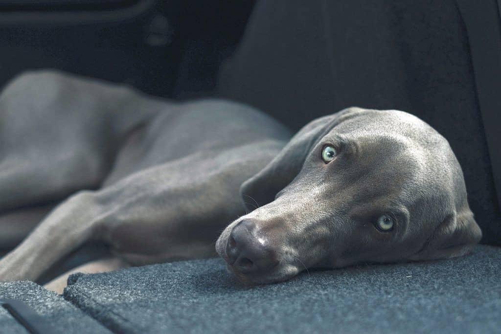 orthopedic dog bed 4