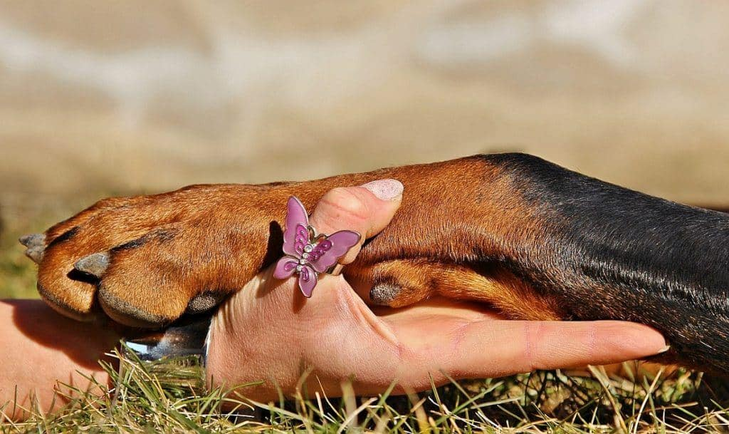 Yeast Infection on Dog Paws: Are There Any Home Remedies?