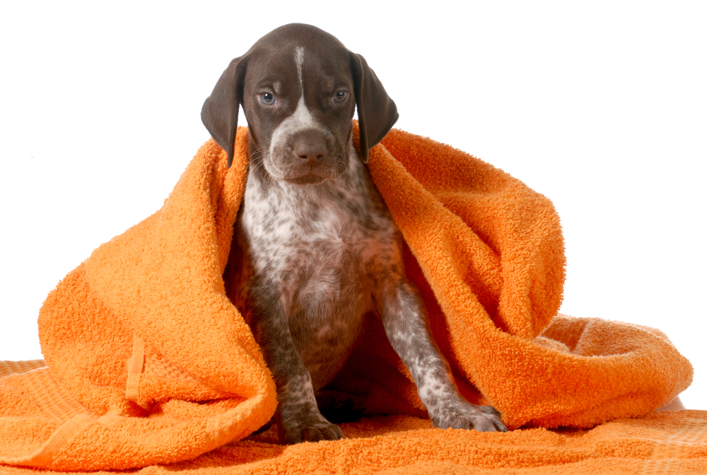 how to clean dog between baths