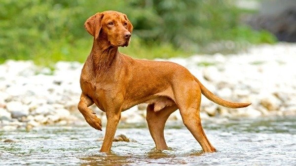 Best Outdoor Dog Breeds   Outdoor Dog Breed Guide   Canine ...