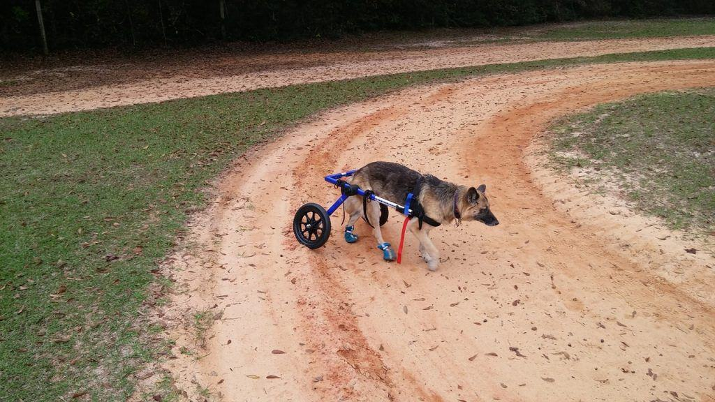 Dog Mobility Issues