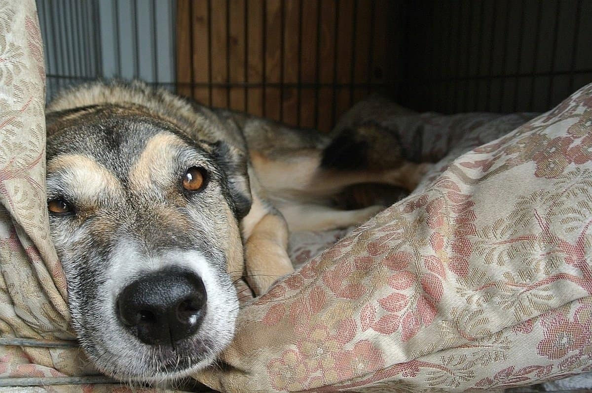 indestructible dog beds 2