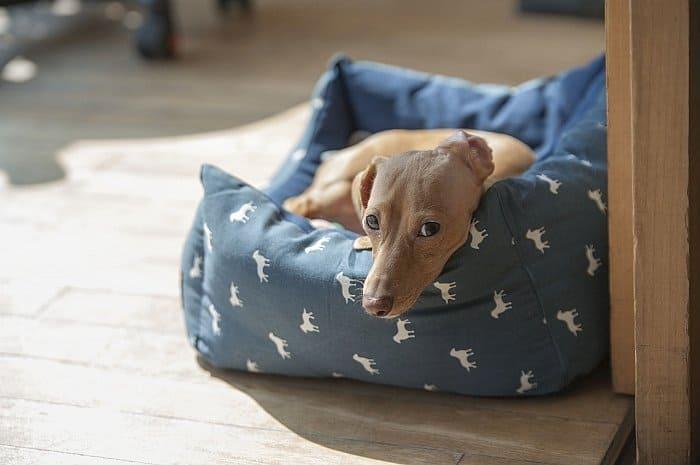 indestructible dog beds 3