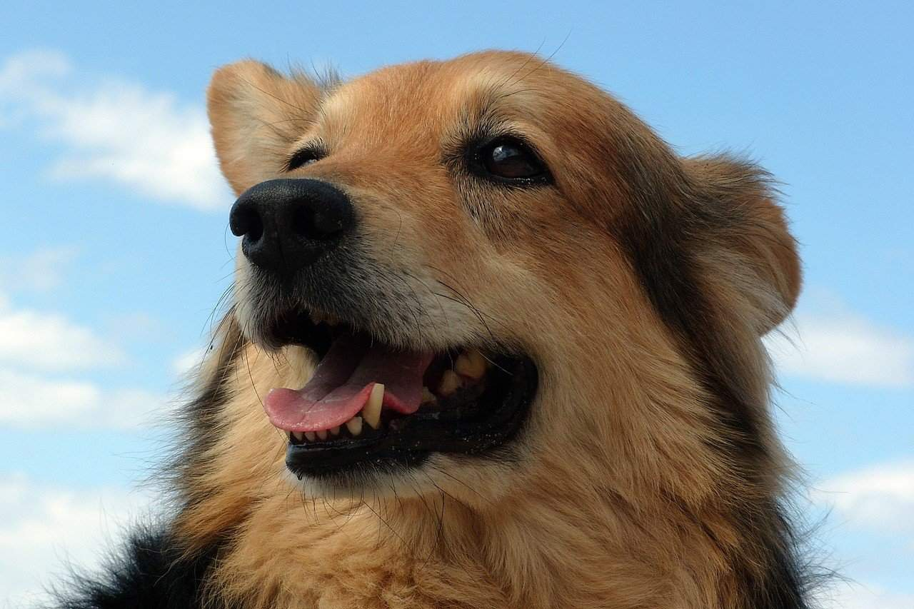 The Top 20 Mixed Dog Breeds in the World - puppytoob.com