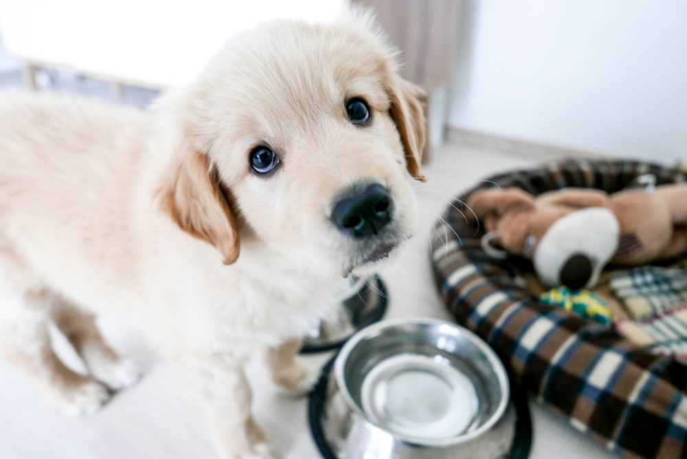 best puppy food for large breeds