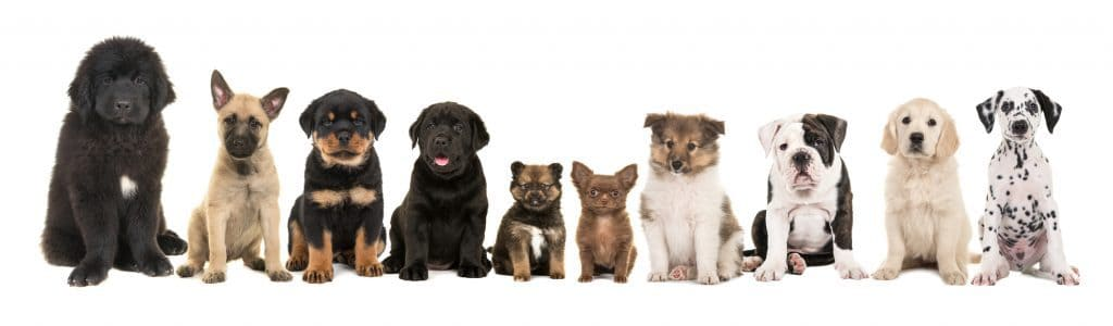 best food for large breed puppies