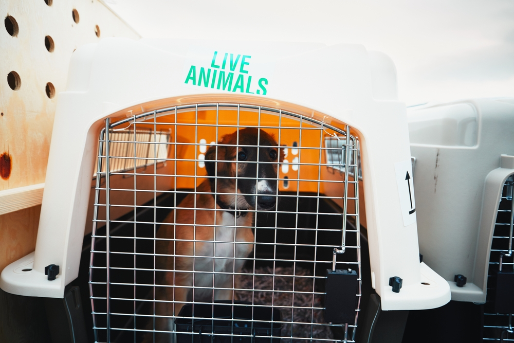 heavy duty dog crate for travel