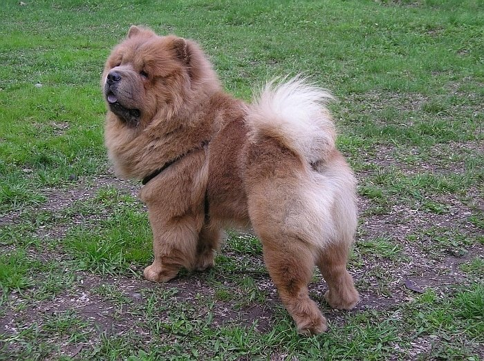 large breed dogs 56
