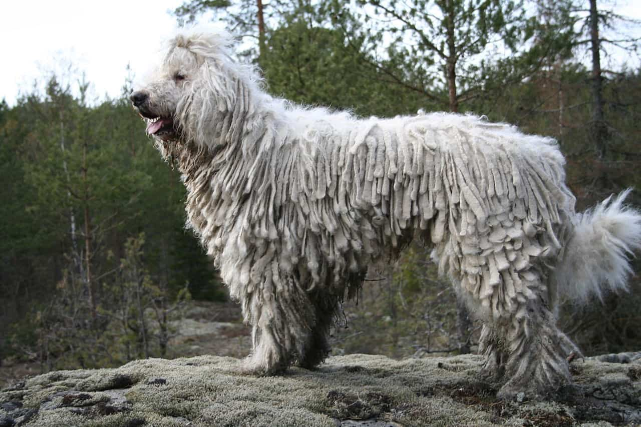 large dog breed 58