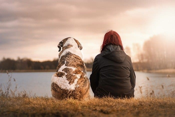 dogs treat depression