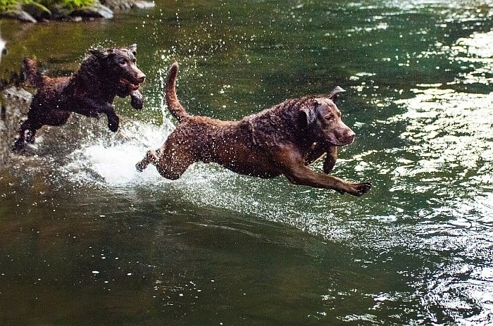 best retrieving dogs 3