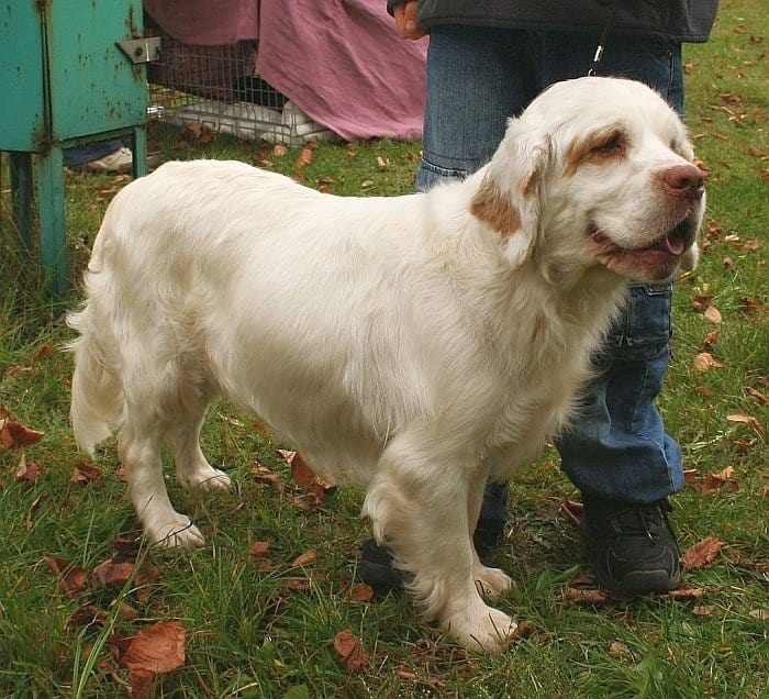 Best big white dogs 5