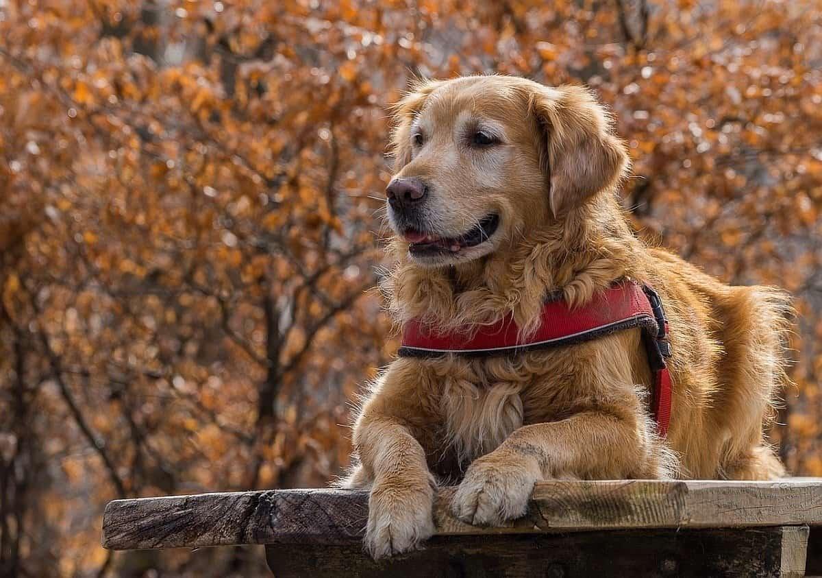 13 Best Big Dog Breeds: Top Large Dogs