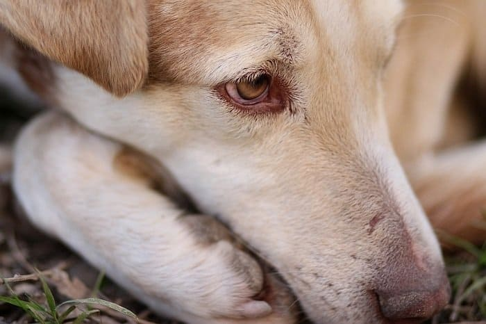 natural dog anxiety remedies