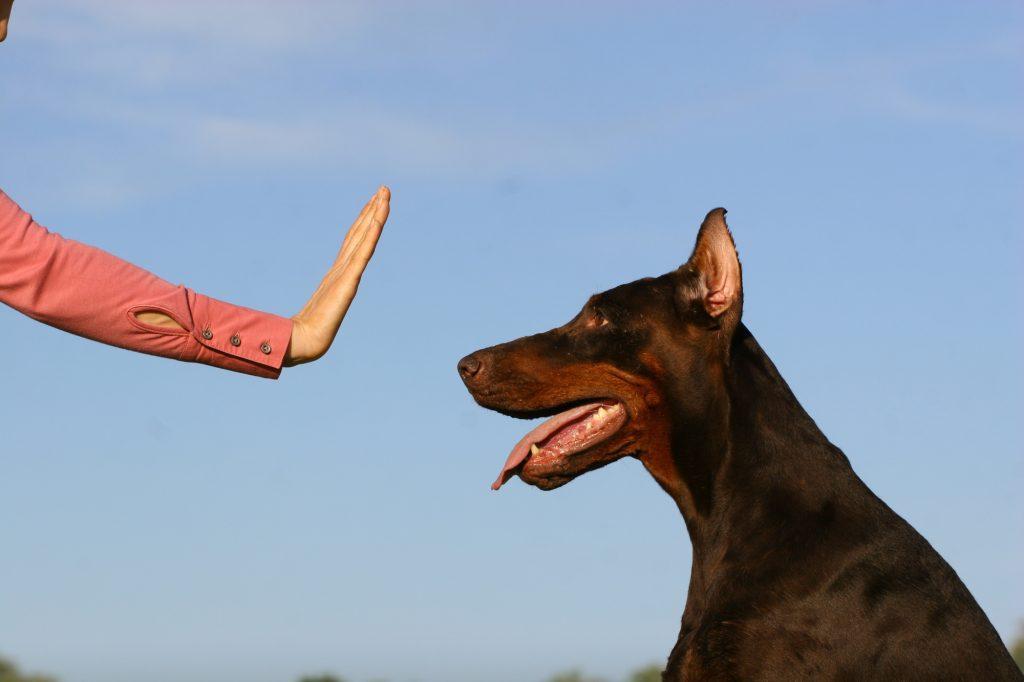 dog command