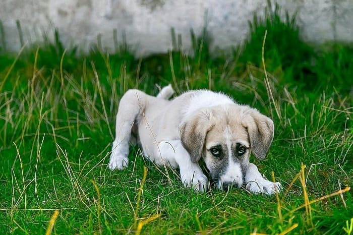 home remedies for worms in dogs