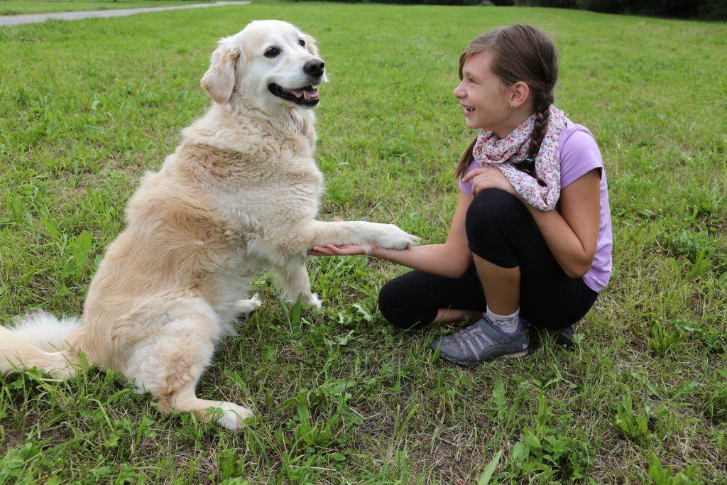 shake dog command