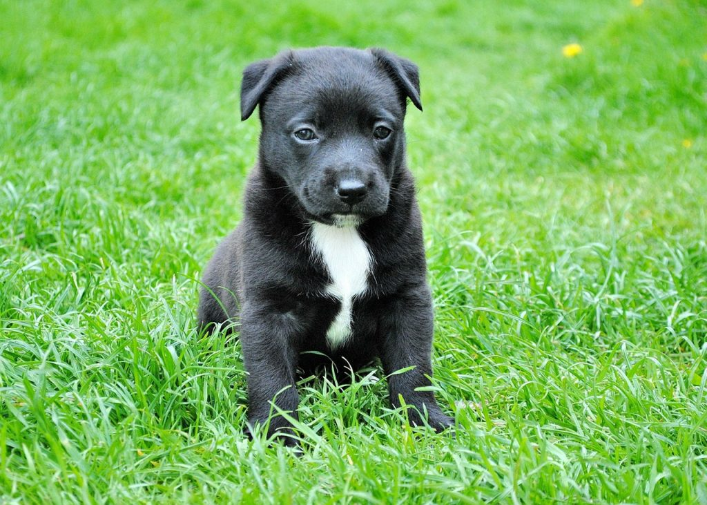 deworming puppies what to expect