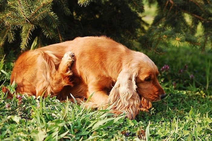 flea prevention for dogs 4