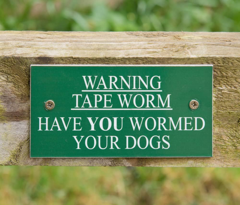 puppy worm symptoms