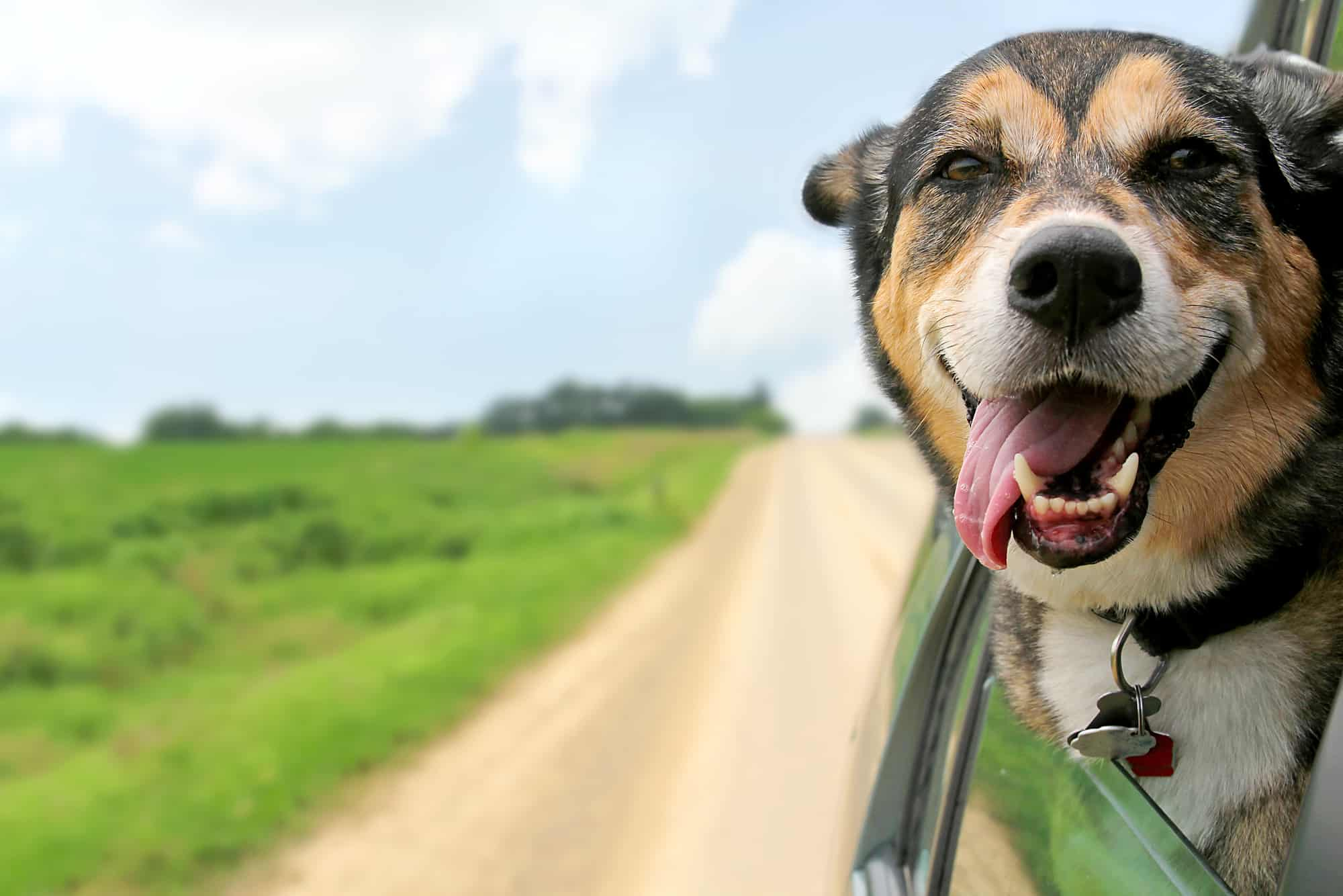 traveling with dog in car