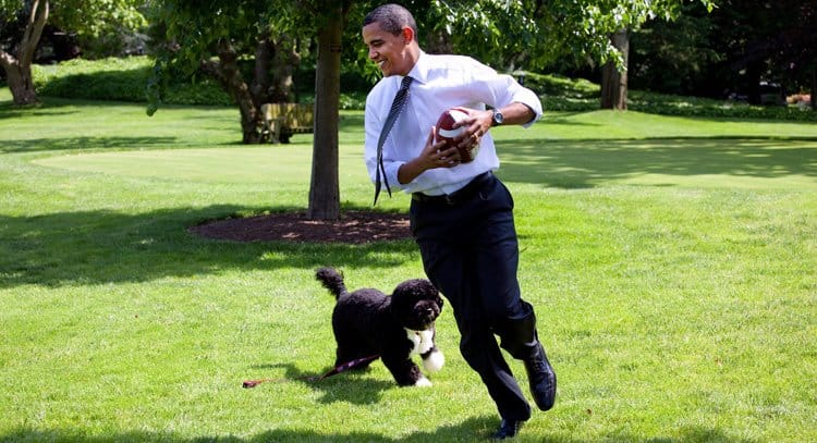 Portuguese Water Dog with Obama