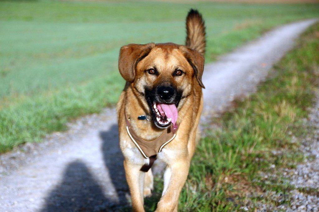 fish oil for dogs