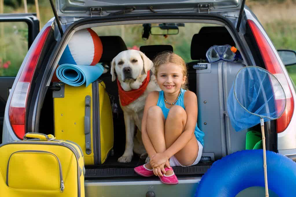 traveling with dogs in car