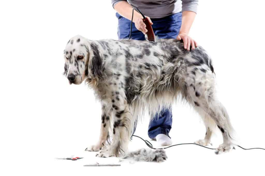 best deshedding tool for dogs
