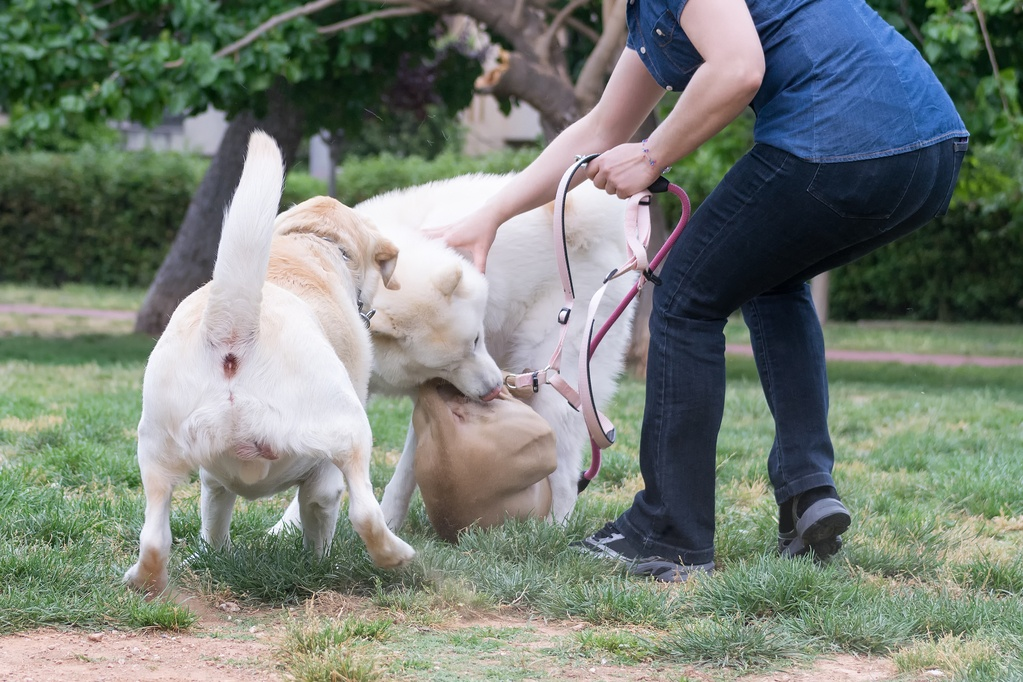 dog on dog aggression