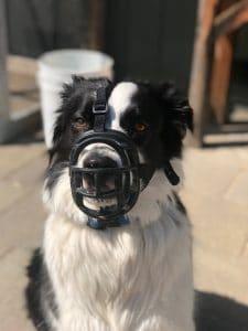 muzzle up