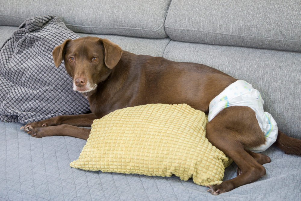 best diapers for large dogs