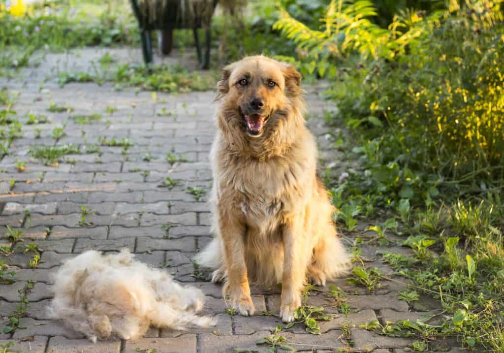 excessive dog shedding