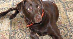 best gps dog tracker